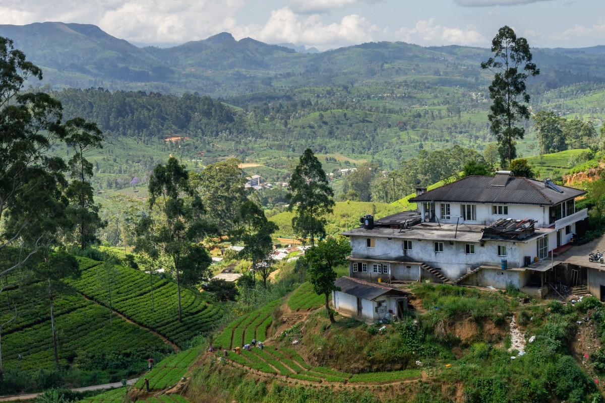 Zdjęcia: okolice Hatton, centralny, Życie na herbacie, SRI LANKA