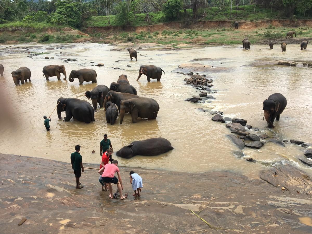 Zdjęcia: Pinnawala,  Sabaragamuwa Province, Sri Lanka - 10 day tour, SRI LANKA