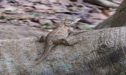 Zdjecie SRI LANKA / - / Botanical Garden / Gampaha