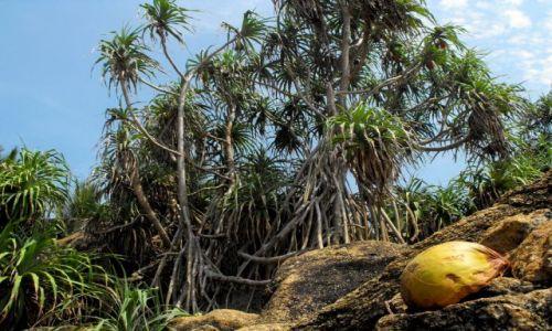 Zdjęcie SRI LANKA / Hikkaduwa / wybrzeże / wybrzeże koło Hikkaduwy