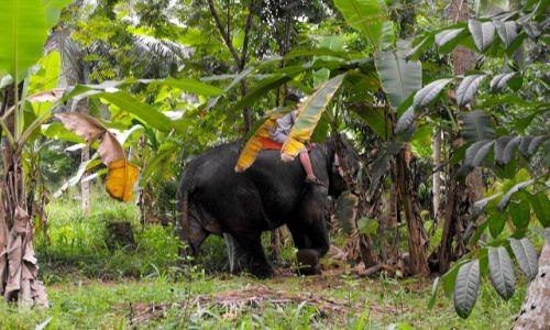 SRI LANKA / Rambukkana / w dżungli / uprowadzenie