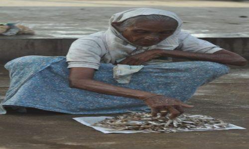 SRI LANKA / Negombo / Targ rybny / Tele mam do sprzedania
