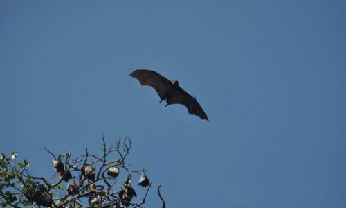 Zdjęcie SRI LANKA / Kandy / Ogrod botaniczny / Jak F-16
