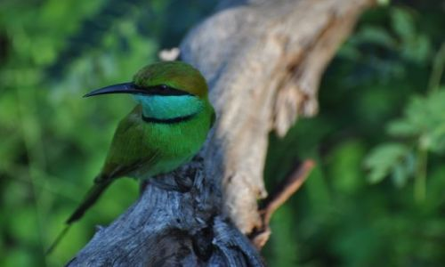 Zdjecie SRI LANKA / Yala National Park / Yala National Park / Ma�y zjadacz ps