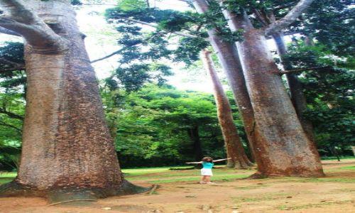 Zdjęcie SRI LANKA / - / Kandy / Baobaby