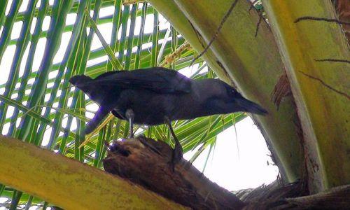 Zdjęcie SRI LANKA / Środkowo-Północna Lanka / Okolice Parakrama Samudra / Ptactwo Lanki