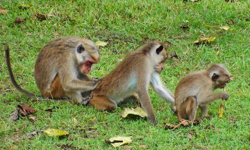 Zdjęcie SRI LANKA / Środkowo-Północna Lanka / Różne miejsca / Spotykane wszędzie na Lance