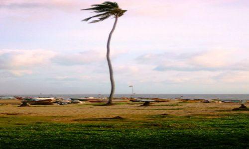 Zdjęcie SRI LANKA / Południowy Zachód Wyspy / gdzieś / Na przekór Tsunami