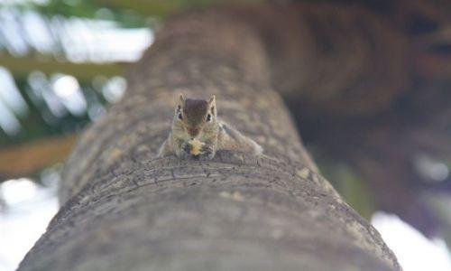 Zdjecie SRI LANKA / - / Negombo / �niadanko
