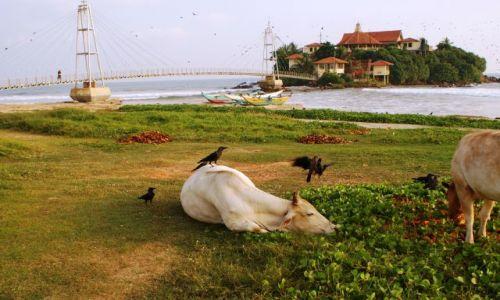 Zdjecie SRI LANKA / Południe Wyspy /   / Plaża jest dla