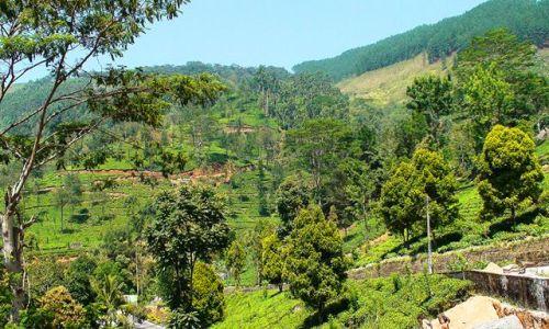 Zdjęcie SRI LANKA / Środkowo-Północna Lanka / Okolice Nuwara Eliya / W krainie herbaty, słoni i palm kokosowych cd.