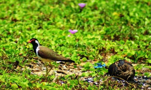 Zdjecie SRI LANKA /   / Kalutara / Na plaży