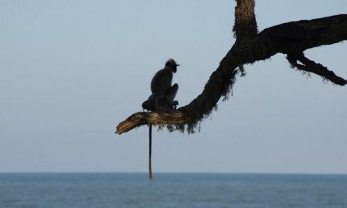 Zdjecie SRI LANKA / Wybrzeże / Yala National park / Romantyk