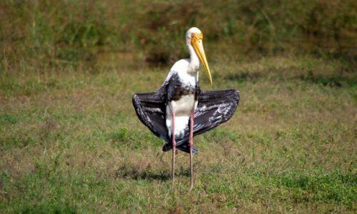 Zdjecie SRI LANKA / Wybrzeże / Yala National park / Dla ochłody ...