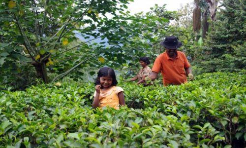 Zdjecie SRI LANKA / Centrum / Okolice Nuwara Elija / Herbaciane uśmiechy