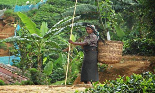 SRI LANKA / Nuwara Eliya / Nuwara Eliya / Tamilska zbieraczka herbaty
