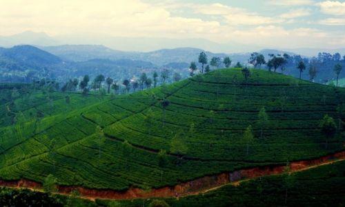 Zdjecie SRI LANKA / Hill Country / Haputale / Sri Lanka19