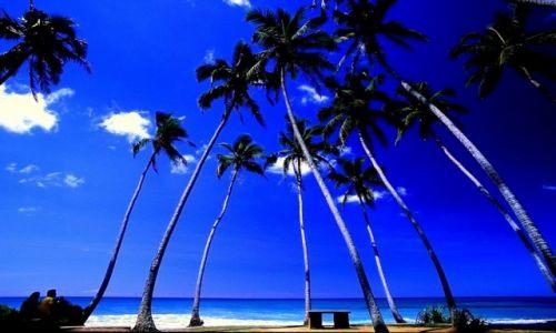 Zdjecie SRI LANKA / Południe / Pod palmami:) / Sri Lanka37
