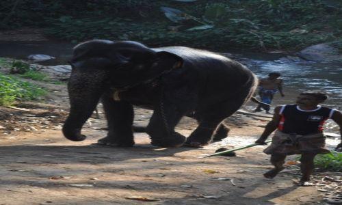 Zdjęcie SRI LANKA / pinnawala / pinnawala / pinnawala -sierociniec dla słoni