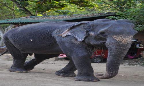 Zdjęcie SRI LANKA / pinnawala / pinnawala / slonie