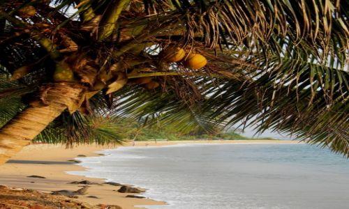 Zdjęcie SRI LANKA / południowe wybrzeże / Mirissa / Mirissa