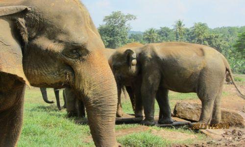 Zdjęcie SRI LANKA / Pinnawala / sierociniec słoni / też mam Cię