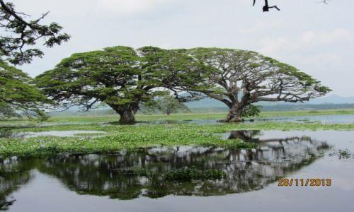 Zdjecie SRI LANKA / okolice Parku Narodowego Yala / jezioro Tissa / drzewa deszczow