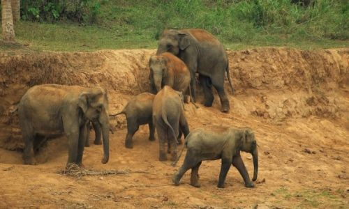 Zdjęcie SRI LANKA / Sri Lanka / Sri Lanka / Sri Lanka