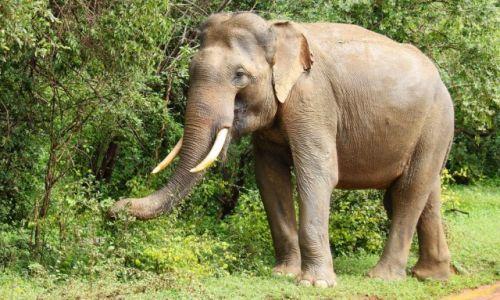 Zdjęcie SRI LANKA / Południe wyspy / Park Narodowy Yala / Yala NP