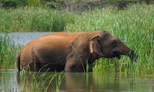 Zdjęcie SRI LANKA / Południe wyspy / Park Narodowy Bundala / Bundala NP