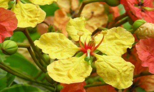 Zdjęcie SRI LANKA / Sri Lanka / Sri Lanka / Kwiaty