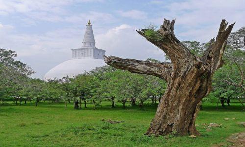 Zdjęcie SRI LANKA / Północ / Anuradhapura / Przemijanie