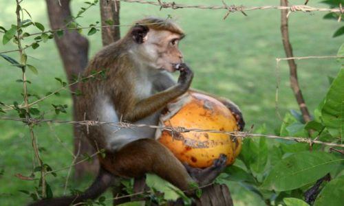 Zdjęcie SRI LANKA / Sri Lanka / Polonnaruwa / Obiad w plenerze