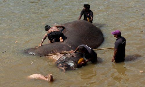 Zdjęcie SRI LANKA / Sri Lanka / Pinnawala / Słoń w kąpieli