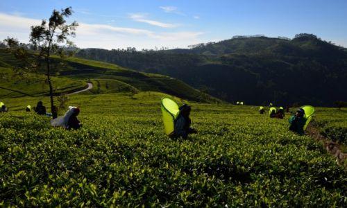 Zdjecie SRI LANKA / Haputale / Lipton Plantation / Motyle Sri Lanki