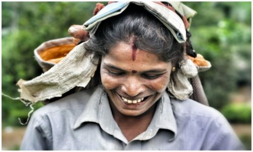 Zdjecie SRI LANKA / haputale / haputale / Rakshmi. The tea picker