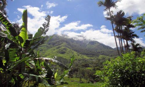 Zdjęcie SRI LANKA / Prowincja południowa / Kulapahana / Tonąc w zieleni