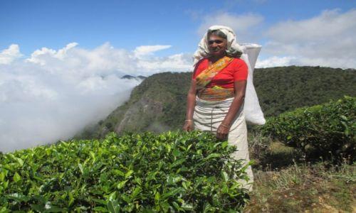Zdjęcie SRI LANKA / Prowincja południowa / Okolice Parku Hortona / Herbaciarka