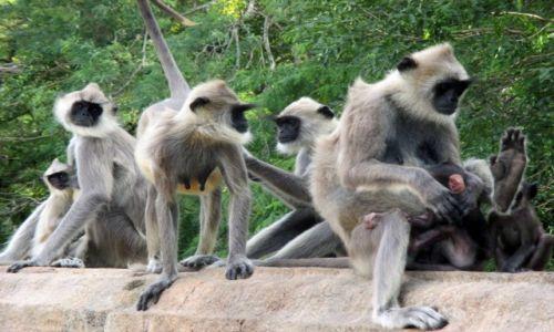 Zdjęcie SRI LANKA / Anuradhapura / Mihintale / Rodzinnie