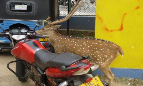 Zdjecie SRI LANKA / Północno-wschodnie wybrzeże / Trincomalee - dworzec autobusowy / Dobrze zaparkowałem?