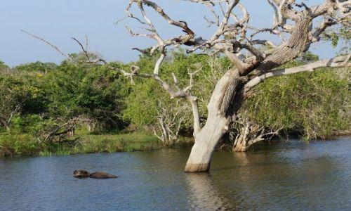 Zdjecie SRI LANKA / Yala / park narodowy Yala / Sri Lanka