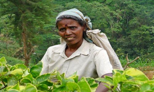 Zdjecie SRI LANKA / Prowincja Centralna / Okolice Nuwara Eliya / Herbaciarka II