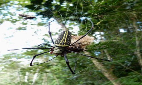 Zdjecie SRI LANKA / Prowincja Sabaragamuwa / Sinharaja / W lesie deszczowym