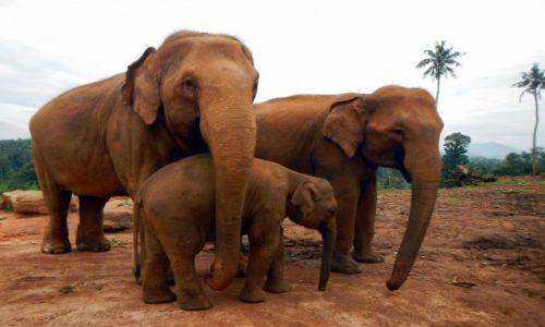 Zdjęcie SRI LANKA / Prowincja Sabaragamuwa / Pinnawala / Portret rodzinny