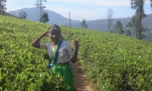 Zdjęcie SRI LANKA / Nuwara Eliya  / Nuwara Eliya  / w pracy