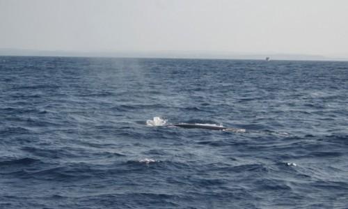 Zdjecie SRI LANKA / azja / azja / wieloryby