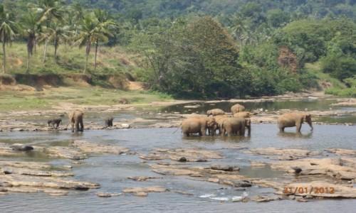 Zdjęcie SRI LANKA / xxx / Pinnawala / Sierociniec dla słoni