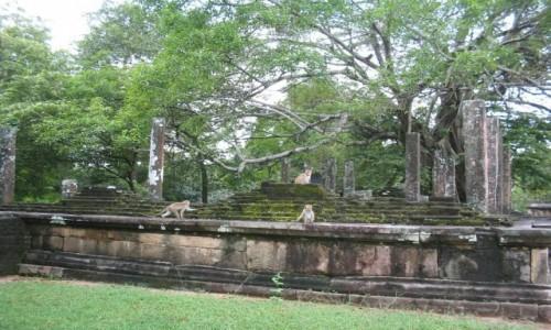 Zdjecie SRI LANKA / - /  Polonnaruwa / Sri Lanka - Historyczne miasto Polonnaruwa