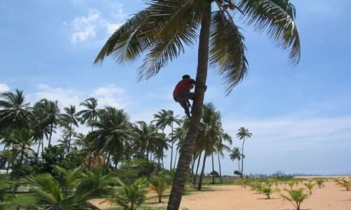 Zdjecie SRI LANKA / - / Pegasus Reef Hotel (Sri Lanka Wattala) / Rajskie plaże i świeże kokosy