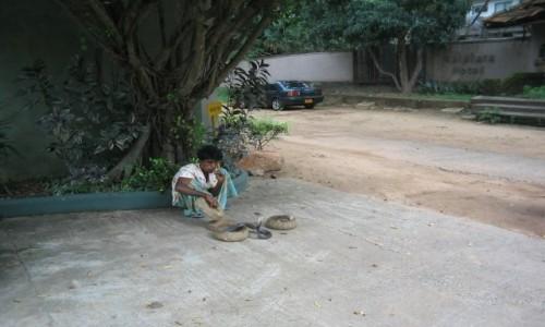 Zdjecie SRI LANKA / - / Sri Lanka / zaklinacz węży